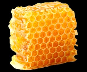 bee, honey, and food image