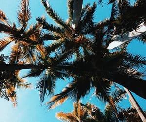 alternative, beach, and sunshine image