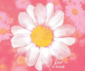 flower, ازهار, and rose image