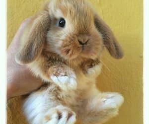 animals, baby, and rabbit image