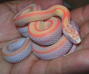 фото, руки, and змея image