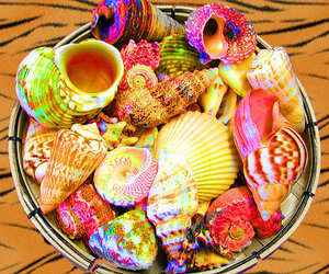 animal print, rainbow, and sea shells image