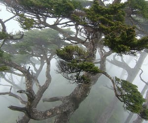 tree, fog, and forest image