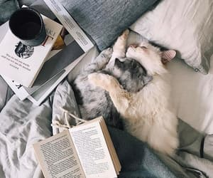 books, cats, and cute image
