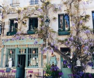 flowers, paris, and tumblr image