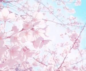 桜, sakula, and cherryblossam image