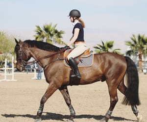 animal, equestrian, and happiness image