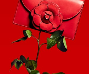 bags, red, and editorial image