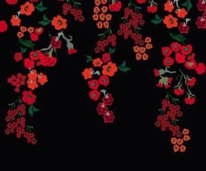 flowers, red and black, and roses image