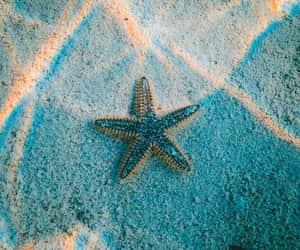 nature, ocean, and starfish image