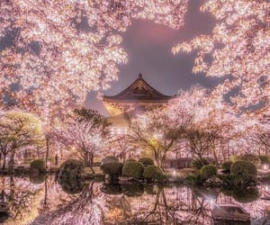japan, pink, and travel image