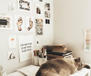 cat, desk, and kitty image