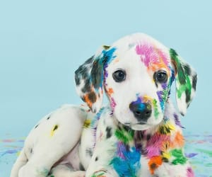 dog, colors, and puppy image