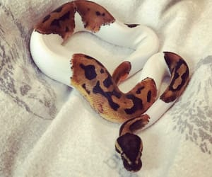 beautiful, morph, and pied image