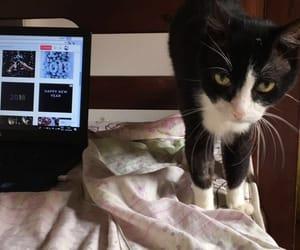 cat, frio, and gatinho image