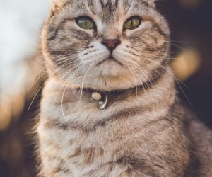 animals, kittens, and cats image