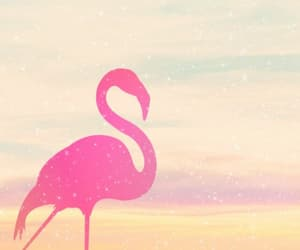 flamingo, pink, and wallpapers image