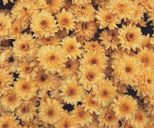 flowers, happy, and yellow image
