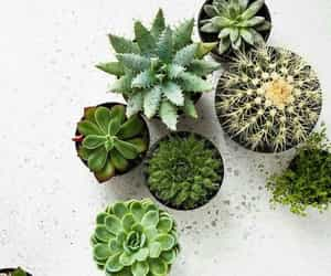 cactus, plants, and succulent image