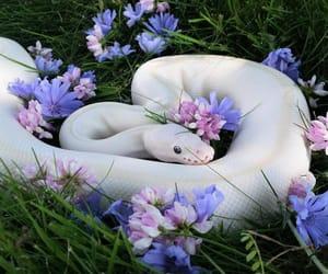 animal, snake, and flowers image