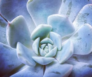 aesthetic, blue, and succulents image