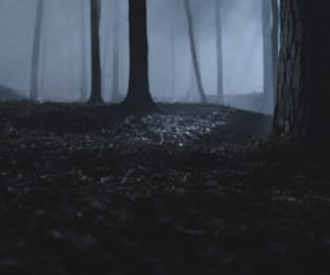 aesthetic, cinematography, and forest image