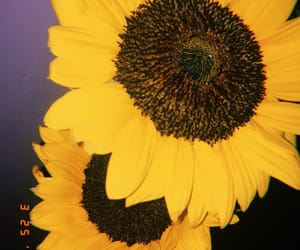 distance, flowers, and sunflower image