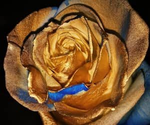 blue, gold, and photo image