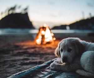dog, fire, and animal image