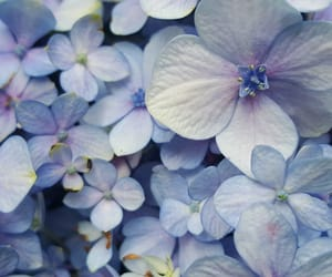 beautiful, floral, and flower image