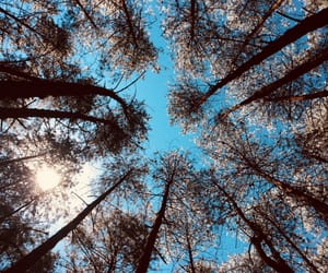 nature, sky, and tree image