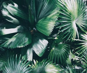 green, vsco, and plant image