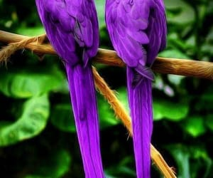 purple, bird, and parrot image