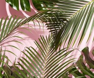 wallpaper, pink, and green image