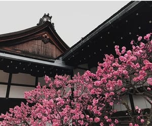 aesthetic, japan, and kyoto image