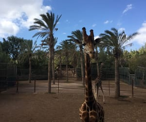 animal, giraffe, and sun image