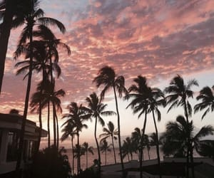 palms, sunset, and sky image