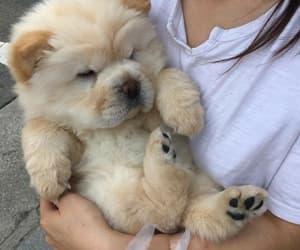 animals, tumblr, and dog image