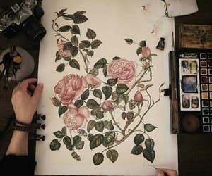 botany, flowers, and rose image