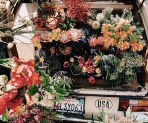 flowers, car, and california image