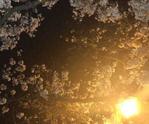 photo, 景色, and 桜 image