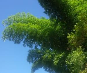 blue, green, and natureza image