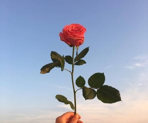 rose, flowers, and sky image