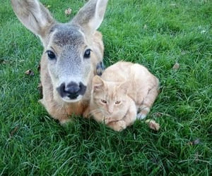 animals, cats, and deer image