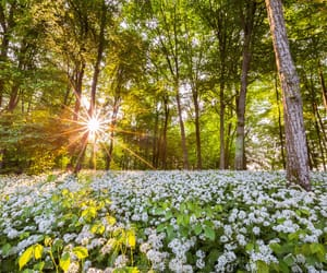 blossoms, landscapes, and nature image