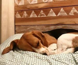animals, inspiration, and beagle image