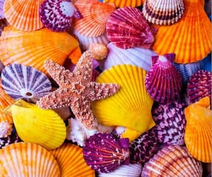 shell and summer image