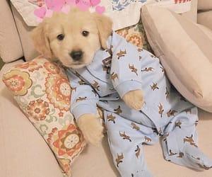 animal, dog, and baby image
