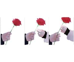 rose, webtoon, and love image