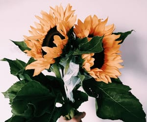 floral, flowers, and sunflowers image